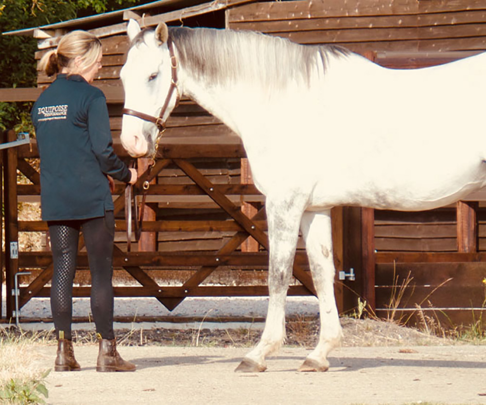 Equine Behaviour at Equipoise Performance