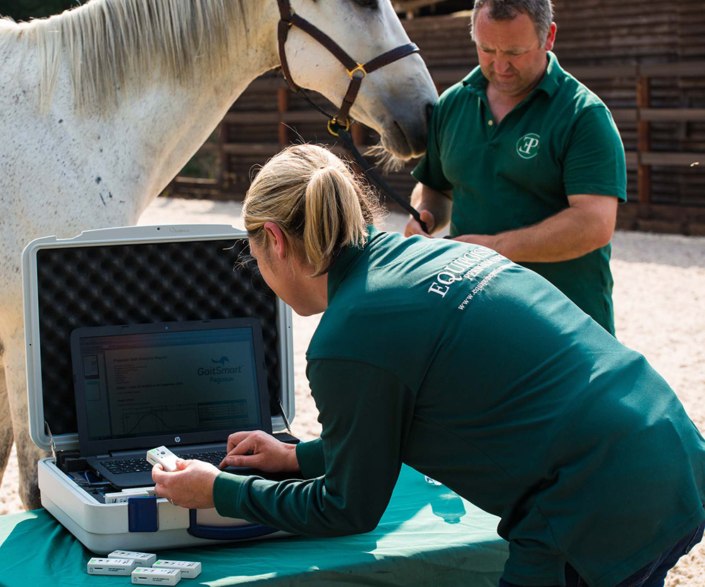 Equine Gait Analysis at Equipoise Performance