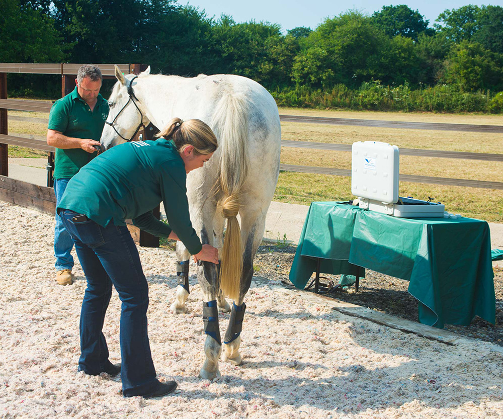 Equine Manual Lymph Drainage ar Equi[poise Performance