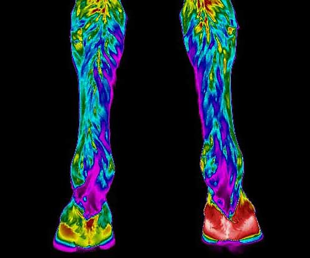 Equine Thermography at Equipoise Performance