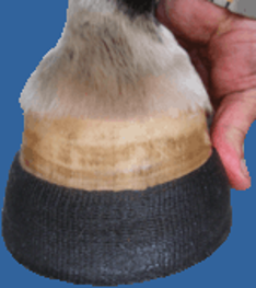 Perfect Hoof Wear Poly Wrap
